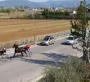 """Sora,Corsa clandestina di cavalli. Quadrini: """"Condivido in pieno la presa di posizione di Ruspandini""""."""